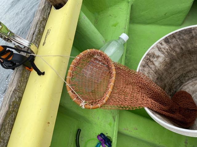 タコを入れる網