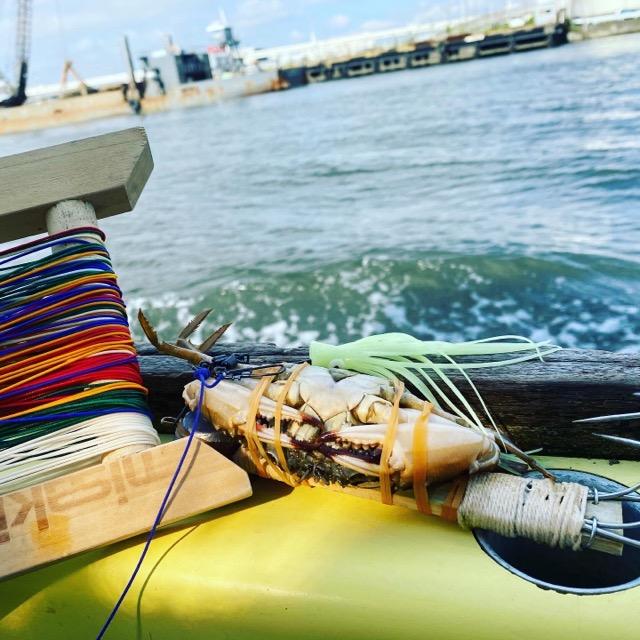 タコ釣りのエサのカニとしぶ糸